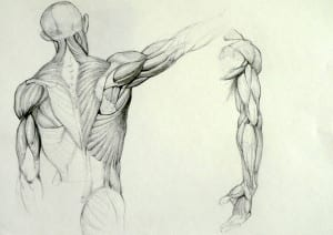 anatomy_study_by_kimsuyeong