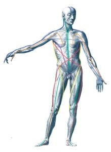 anatomy apps for massage therapists provide visual reference